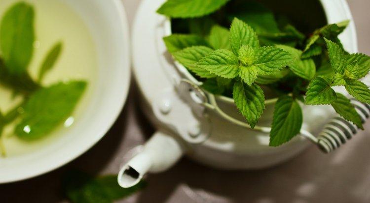 Специалисты рассказали о растениях, помогающих снизить стресс