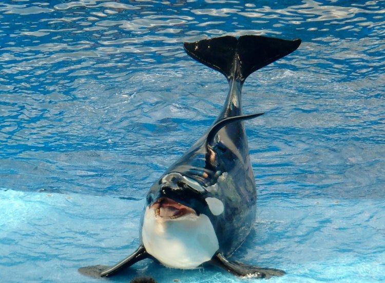 В уфимском парке «Кашкадан» хотят построить океанариум с дельфинами
