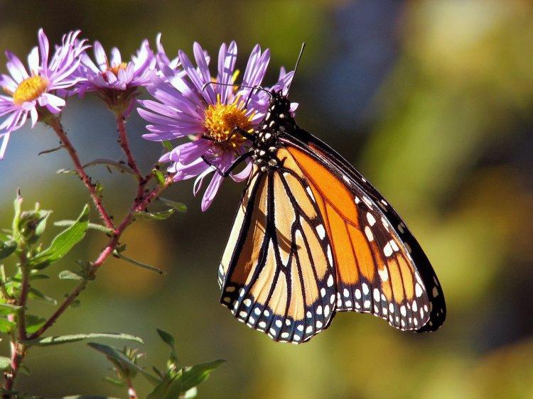 Энтомологи заявили о начале «апокалипсиса среди насекомых»