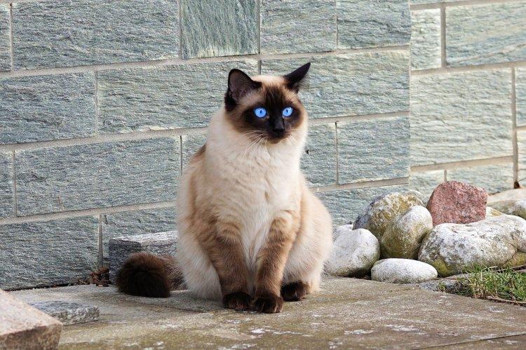 ТОП-10 пород кошек, которые не линяют и не пахнут