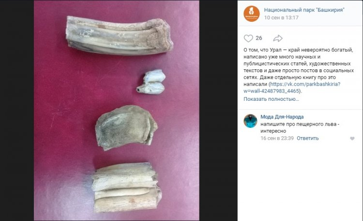 В Башкирии найдены фрагменты ископаемых животных