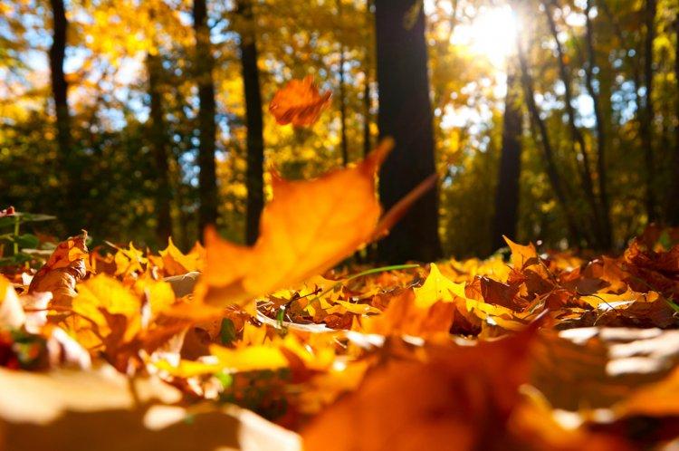 В честь Дня республики жители Башкирии в октябре отдохнут 3 дня
