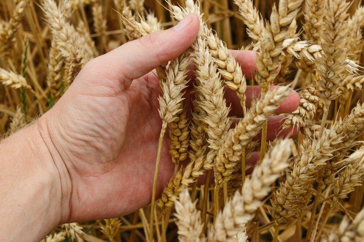 Агропредприятия Башкортостана повысят производительность труда