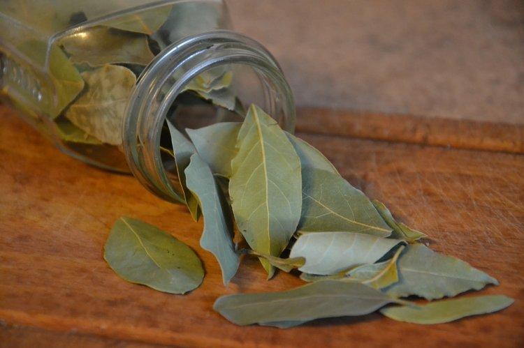 Лавровый лист – мощный магнит удачи: магические свойства и ритуал