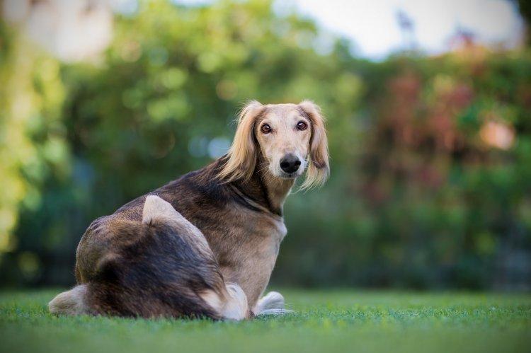 Названы самые популярные породы собак
