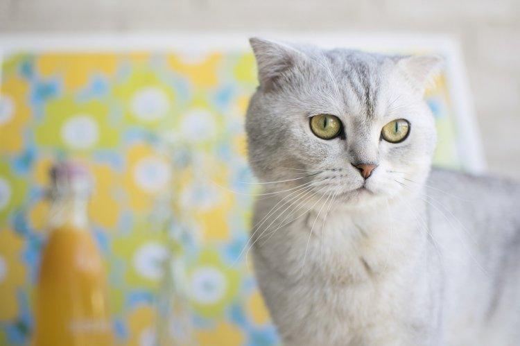 Топ-7 самых ласковых пород кошек
