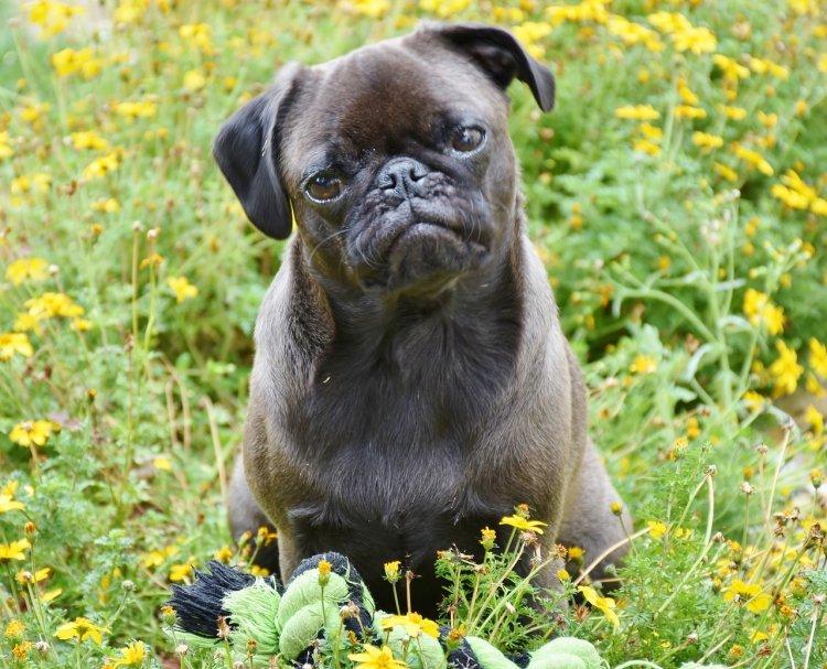 Топ-5 самых дружелюбных пород собак