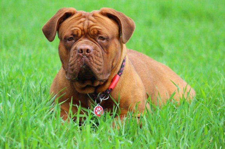 Топ-5 самых упрямых пород собак