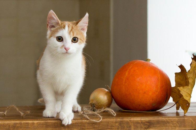 Что означает поведение кошек: приметы и суеверия