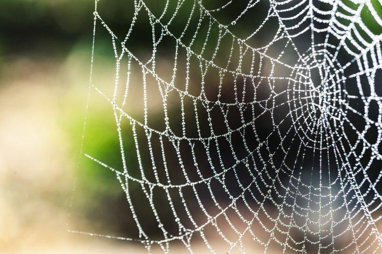 Почему не стоит трогать пауков в доме