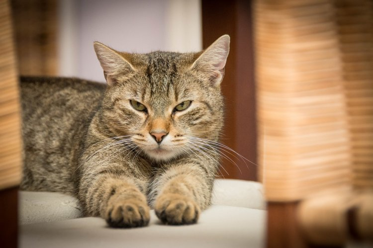 В Тульской области кот-наркокурьер сбежал от полиции