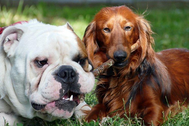 10 пород собак, которые практически не лают