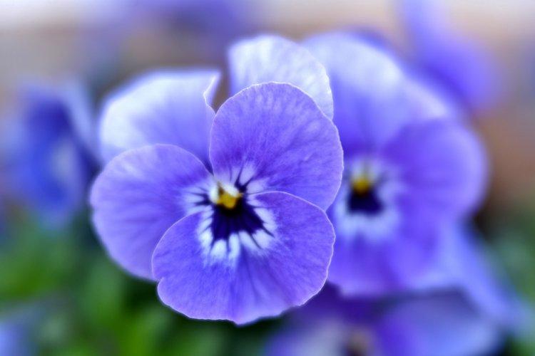 Растения, которые приносят в дом удачу, любовь и благополучие