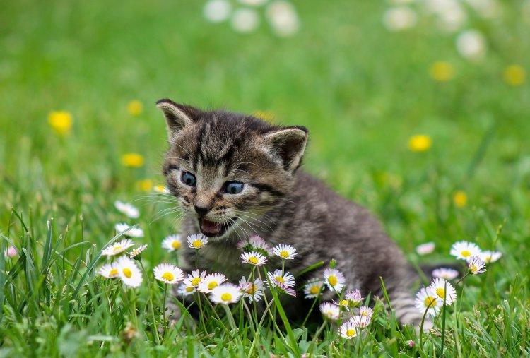 5 способов доставить кошке настоящую радость