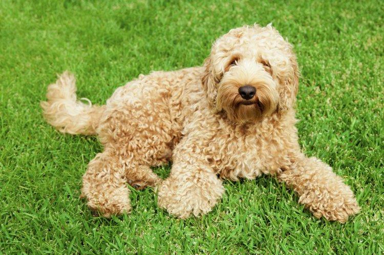 Какая порода собак самая худшая?