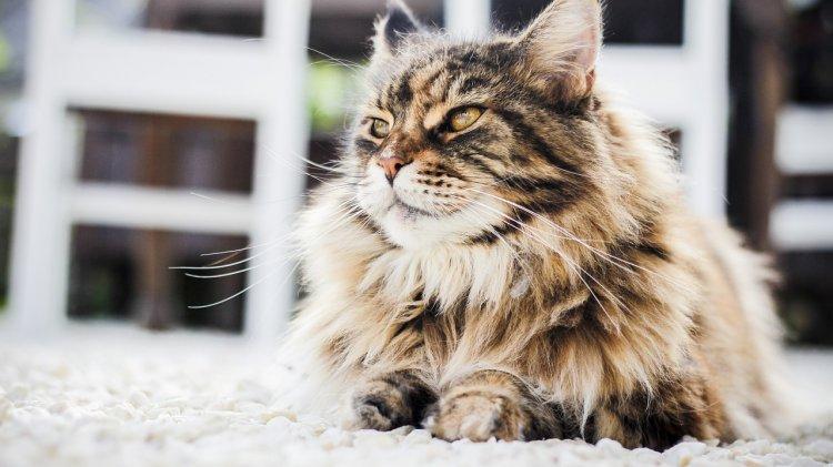 Какой вы кот по знаку Зодиака?