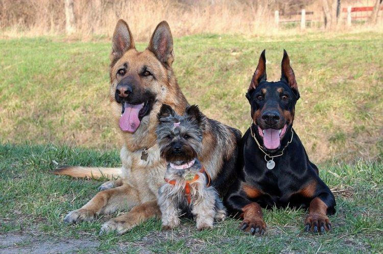 Породы собак, которых не стоит заводить семьям с детьми