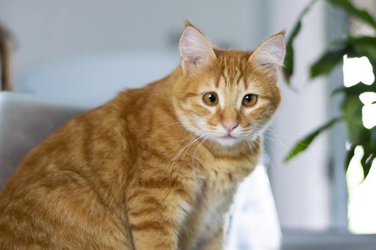 Кошки могут притягивать удачу или неприятности: всё зависит от хозяина