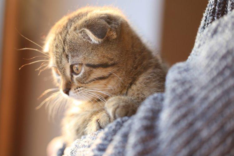 4 породы кошек, которые способны вылечить своего хозяина