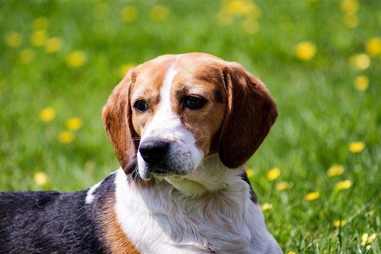Топ-10 самых вонючих пород собак