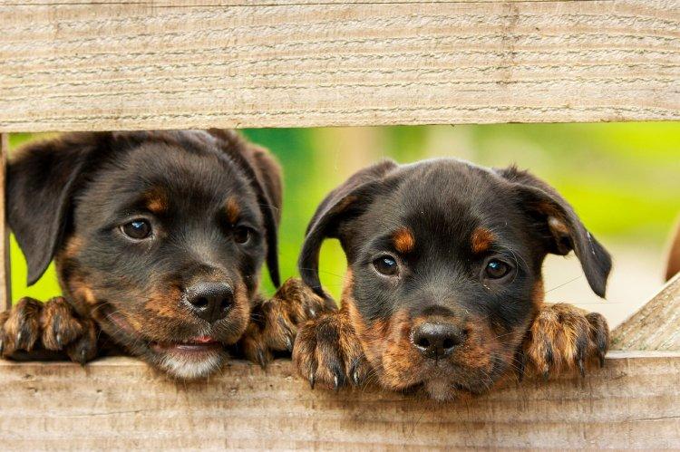 ТОП-10 ошибок, которые совершает большинство владельцев собак