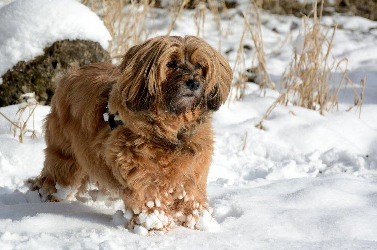 Топ-6 самых активных пород собак