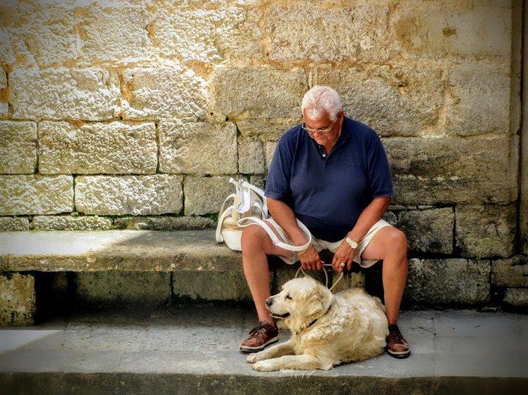 Домашние питомцы для пожилых людей: кошки или собаки?