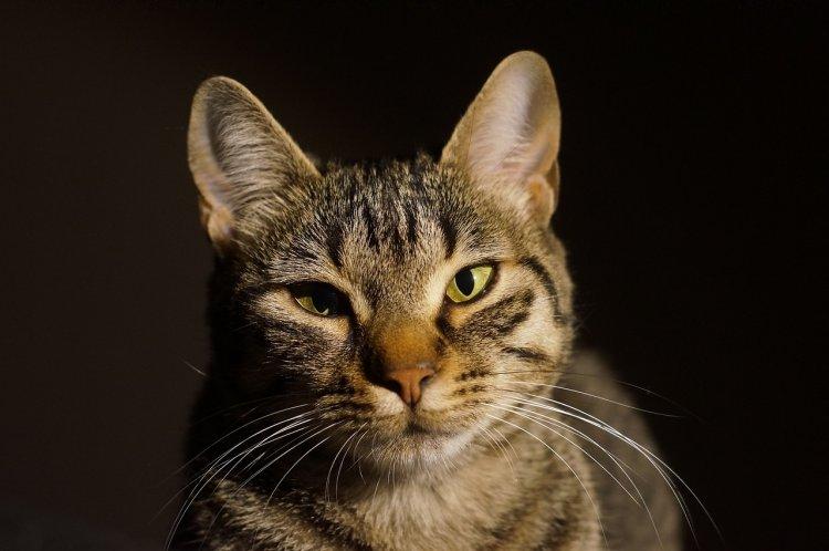 Почему нам кажется, что кошки высокомерны и недружелюбны