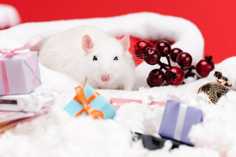 Чем опасен 2020 год Белой Металлической Крысы
