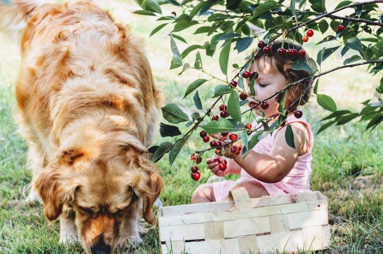 Породы собак, которые станут отличными няньками для детей