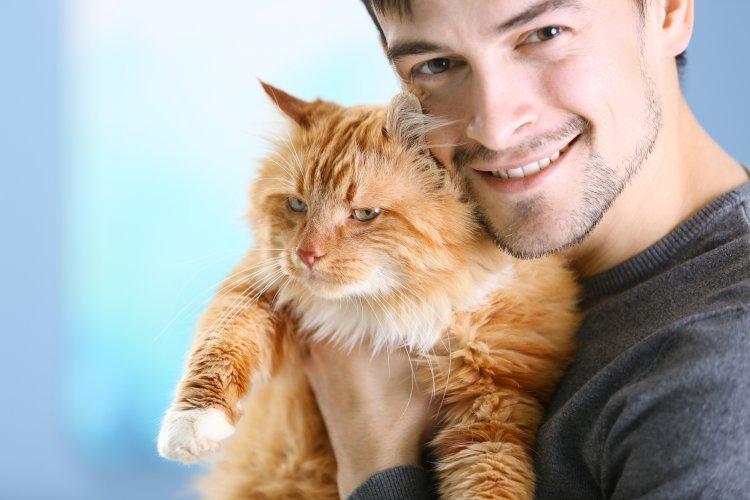 Топ-5 пород кошек, которые нравятся мужчинам