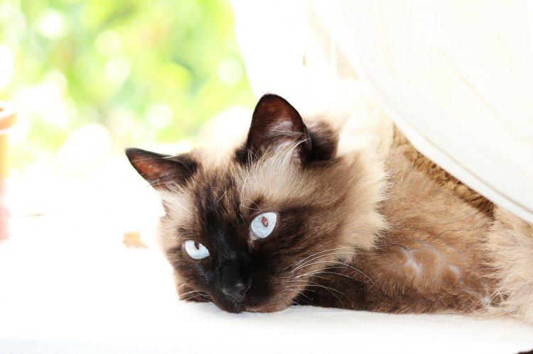 Какие кошки идеальны для семей с маленькими детьми, рассказали специалисты