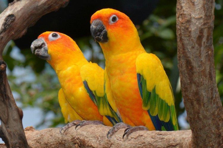 Топ-10 попугаев для содержания в домашних условиях