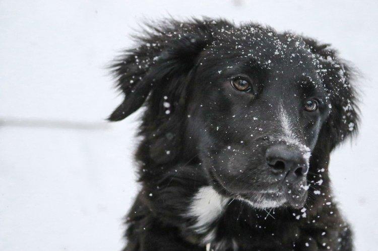 5 пород собак, которые любят долго гулять