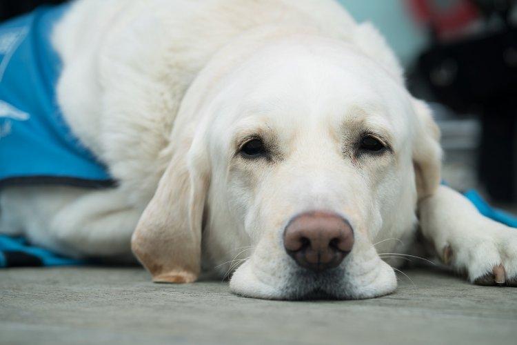 Ветеринары рассказали, почему нельзя обнимать травмированную собаку