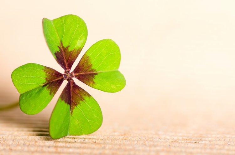 Пять примет на удачу, которые всегда сбываются