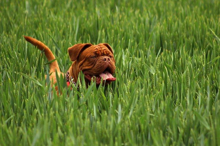 6 пород собак, которые могут доставить массу хлопот
