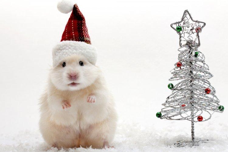 Год Белой Крысы: как встречать ичто готовить на Новый 2020 год