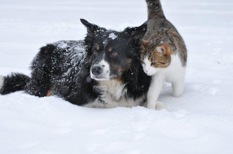10 весомых доказательств того, почему кошка лучше собаки