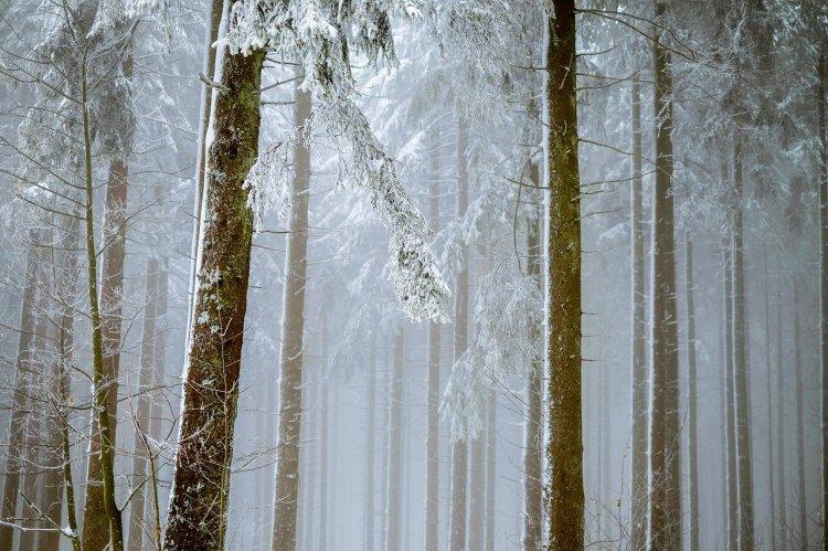 Башкортостан – в числе лидеров по искусственному лесовосстановлению