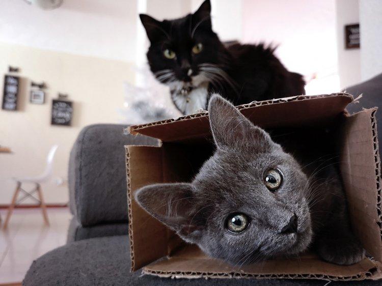 Почему кошки любят коробки, рассказали ученые