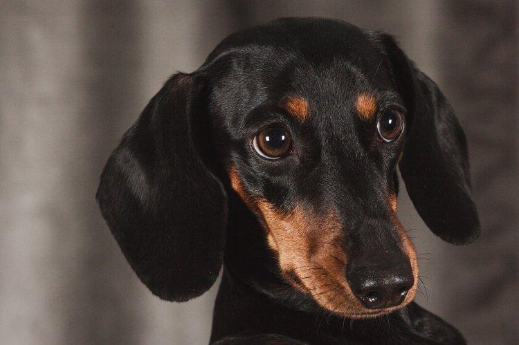 5 самых ревнивых пород собак в мире, назвали ученые
