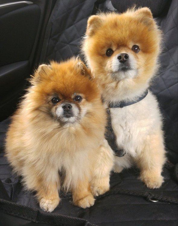 Названы самые популярные у россиян породы собак