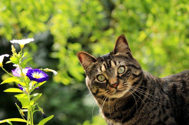 «Штрих-кот» удачи: почему полосатый питомец в доме сулит удачу хозяину