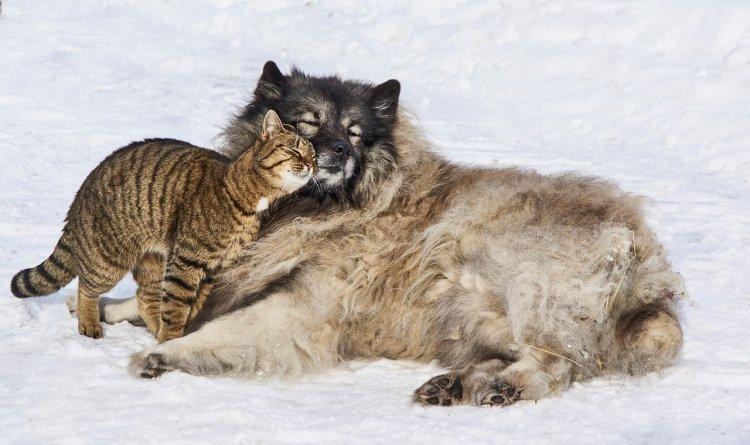Топ-8 пород собак, которые дружат с кошками