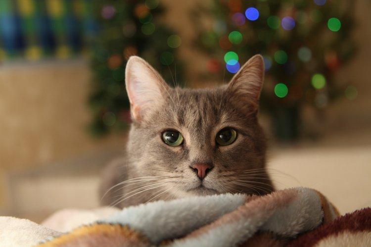 Пушистые помощники: Как серые коты намяукивают деньги и другие блага своим хозяевам