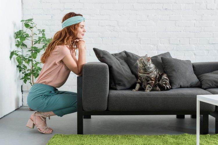 О чем предупреждают коты, когда портят мебель хозяев