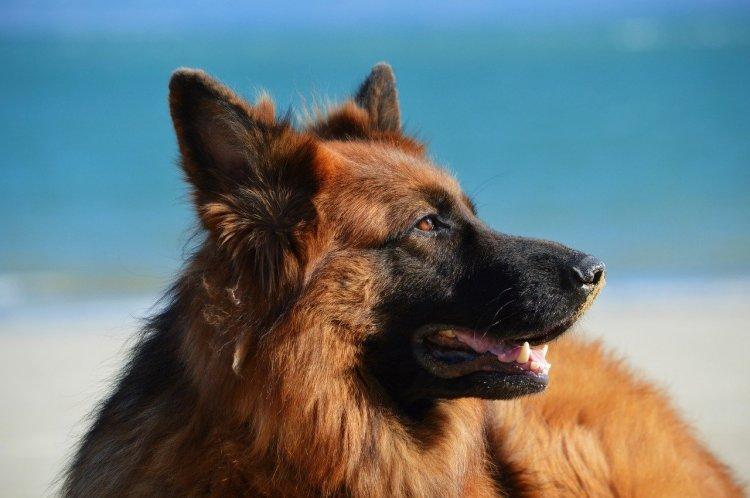 Собаки, которые не прощают предательство своему хозяину