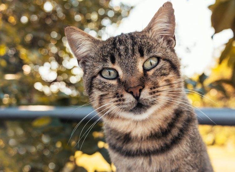 Покормите бездомного кота: Какие кошки приносят удачу?