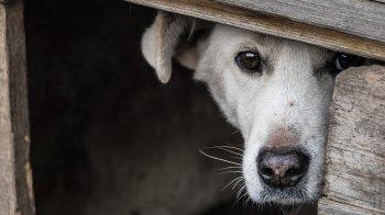В Стерлитамаке из собачьей будки украли более 1 миллиона рублей